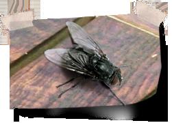 Last van vliegen rondom de woning huidige problemen for Vliegen in de tuin